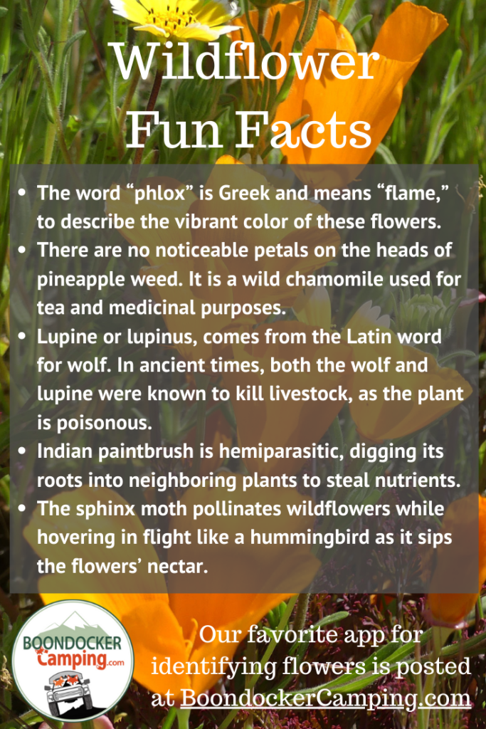 Fun facts about wildflowers