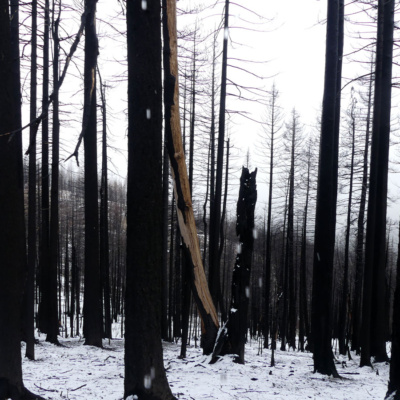 Burned forest in Berryessa Snow Mountain National Monument