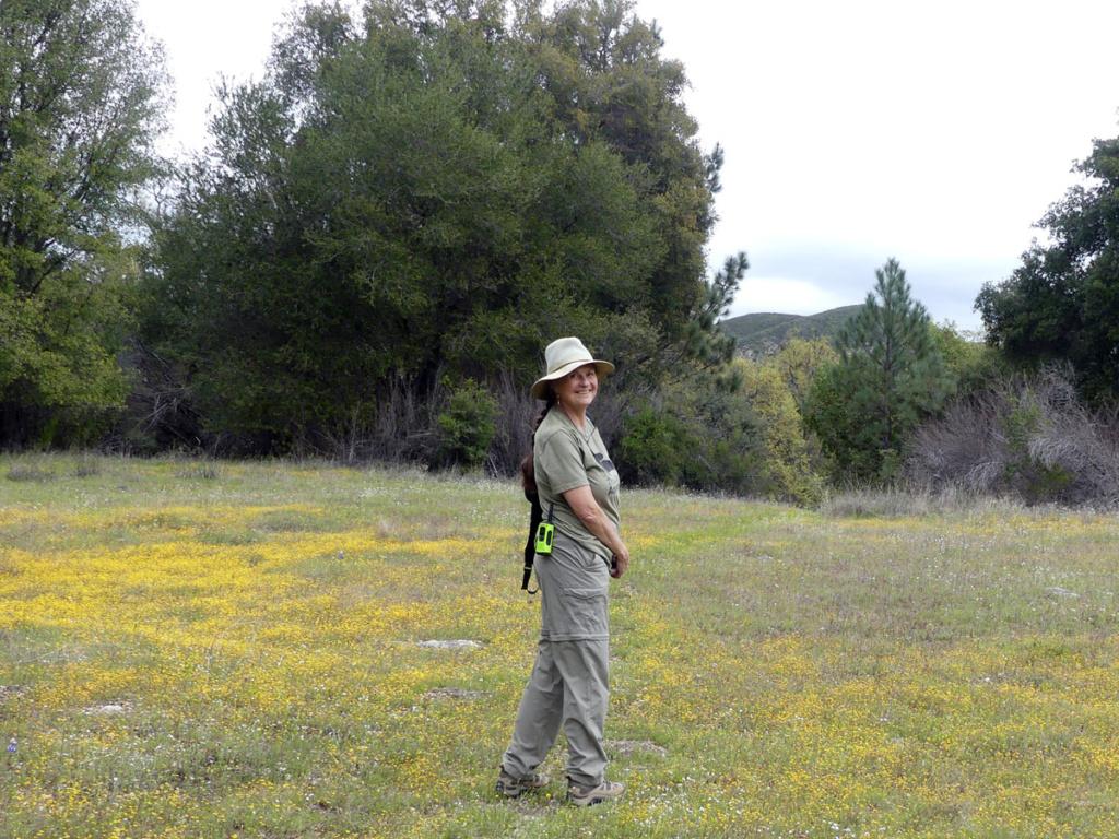hiking in meadow wildflowers